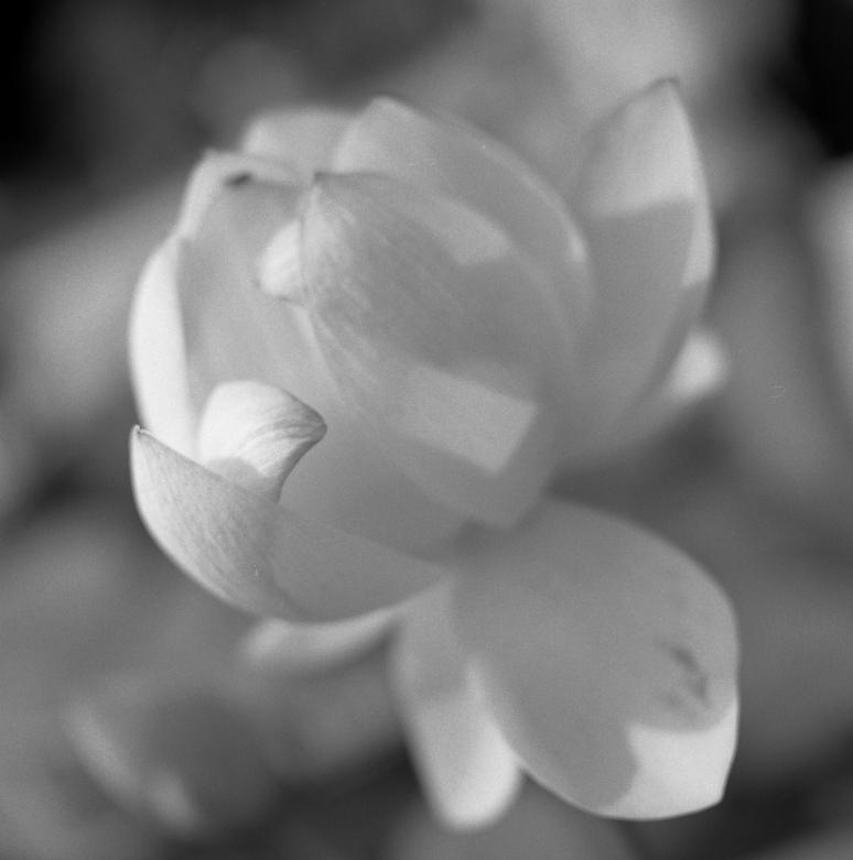 Jardin des plantes - Fleur 2
