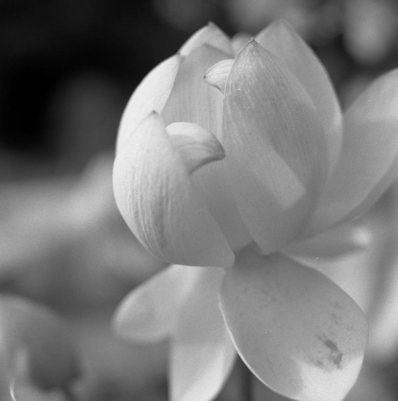 Jardin des plantes - Fleur